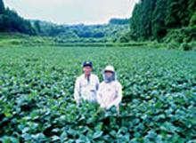 波野村大豆生産部会長岩瀬様ご夫妻(阿蘇市有機大豆)