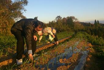 熊本県宇城市 にんにく畑、みかん畑